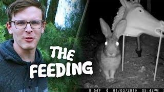 Video Feeding CREEPY Rabbits - Save the Squirrels Initiative MP3, 3GP, MP4, WEBM, AVI, FLV Januari 2019