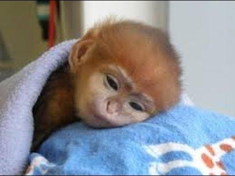 Monkey funny cute