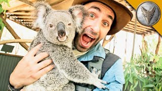 Koala Roars and Gives Stinky Hugs! by Brave Wilderness