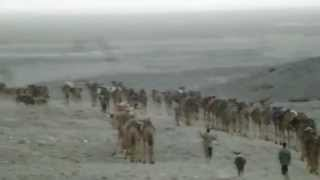 Camel Caravan Leaves Hamed Ela Toward The Salt Harvesting Fields in the Afar region of Ethiopia