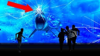 Video Why NO Aquarium In The WORLD Has a Great White Shark! MP3, 3GP, MP4, WEBM, AVI, FLV Juli 2018