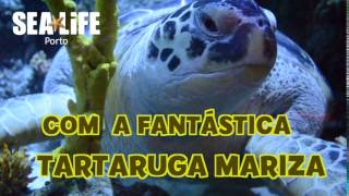 Festival da Tartaruga no SEA LIFE Porto