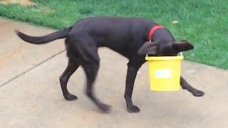 Psy, które utknęły