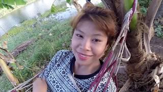 Chaiyaphum Thailand  city photo : Thailand Chaiyaphum 2015 2558 Visit To Chaiyaphum And GrandPa Lae And Family