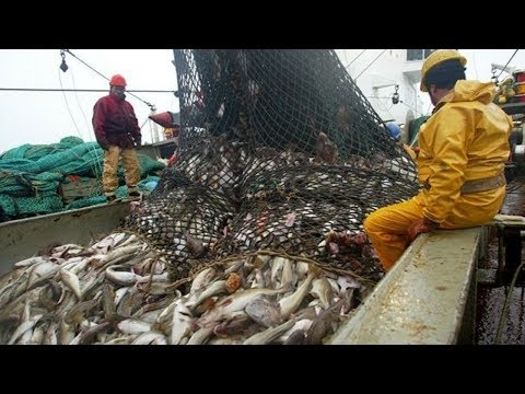 The Most Satisfying Big Catch Fishing in The Deep Sea With Net - Thời lượng: 13 phút.