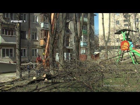 """Мешканці - за, активісти - проти: як у Рівному """"воюють"""" за дерева [ВІДЕО]"""