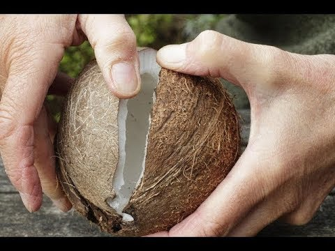 The BEST Way To Open & Eat Coconuts Without Any Tools