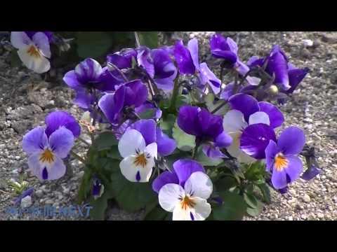 行楽彩る和みの花壇