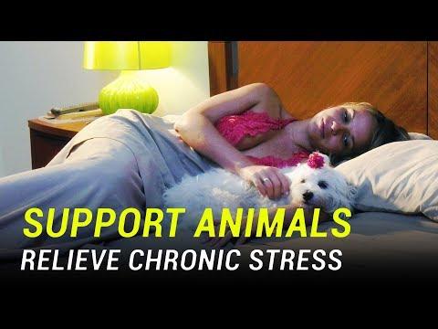 Chronic stress impacts everyone around us