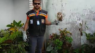 Equipe técnica da Adema resgata coruja no interior do estado