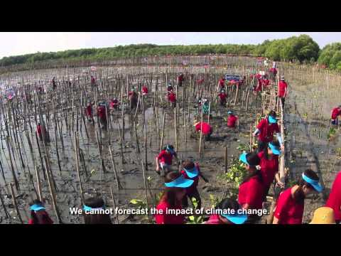 Protecting Thailand's Mangroves