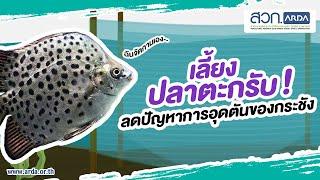 ปลาตะกรับ ช่วยลดปัญหาการอุดตันของกระชัง