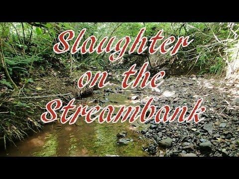 woman slaughte woman kill animal ring
