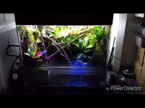 Chinese water dragon semi-aquatic terrarium mistking waterfall fluval_Terrárium, Vivárium