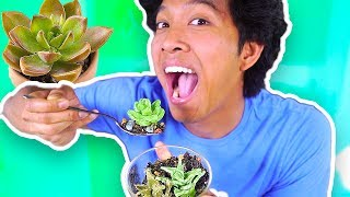 HOW TO MAKE Edible Candy Plants (100% Edible) FAIL OR NAIL? *Not Clickbait