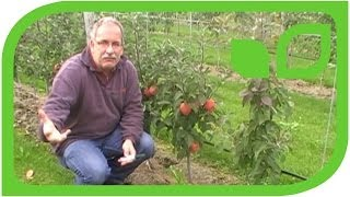 #256 Der kompakte Apfelbaum Maloni Lilly