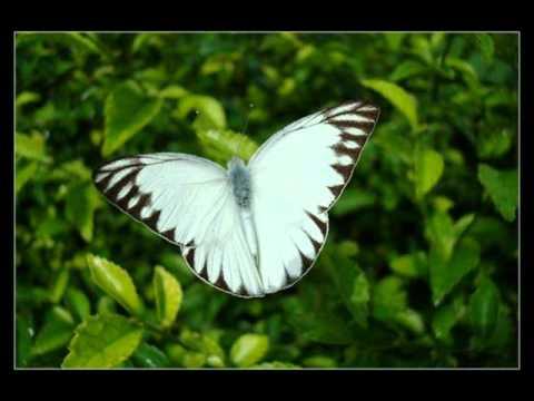 Imagenes coloridas de las mariposas las mariposas for Villas las mariposas