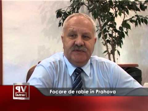 Focare de rabie în Prahova