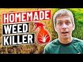 How to make homemade weed killervinegar, dish soap, salt