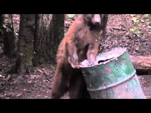 可愛小熊,為了蛋糕而瘋狂!