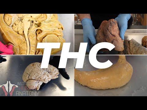 The Anatomy of THC