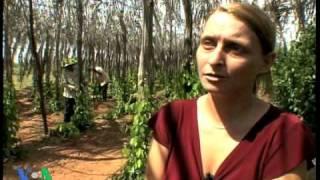 Khmer Documentary - VOA, Cambodia