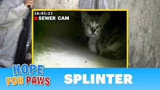Kitten called for help from a storm drain until a man heard his little voice. by Hope For Paws