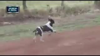 Очень везучая собачка на трассе для ралли