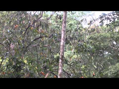 Encontro com os tucanos em Miracatu-SP.
