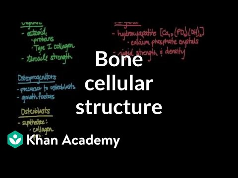 Cellular Structure Of Bone Video Khan Academy