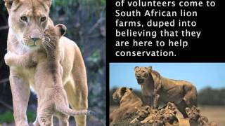 CACH /Campaign Against Canned Hunting Presentation