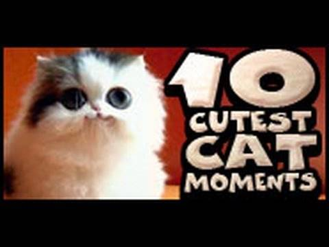 moments - The clips for this compilation of cute cat bloopers, etc. is one of our favorite videos. http://www.liquidgeneration.com/abbc9828.