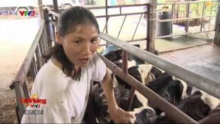 [Cafe Sáng Vtv3 HD]- Chào Buổi Sáng Tại Nông Trại Bò Sữa Tại TP Hồ Chí Minh-2-12-2014