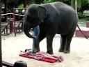 مساج مثير بأيادي فيل !!؟؟