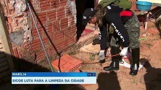 Voluntários saem à caça de escorpiões em Marília