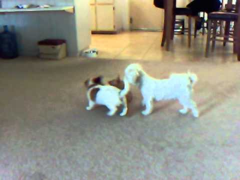 Sandy and Teddy playing with George