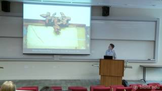 [ARTS 315] Robert Rauschenberg and Jasper Johns - Jon Anderson