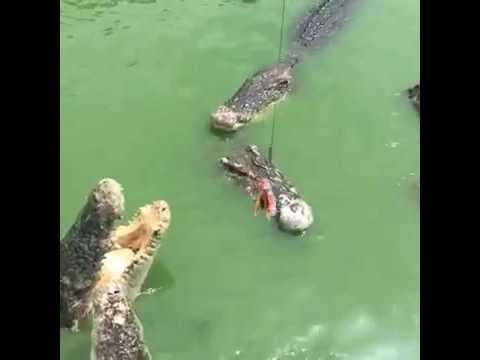 Tourists feed Crocodiles Elephant Kingdom in Chonburi Thailand controversy croc baiting