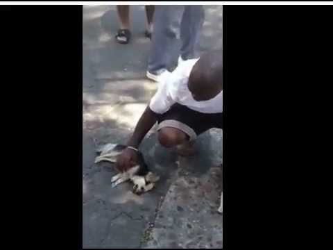 Pit Bull kills little dog – the aftermath. Poor lil' Chihuahua :(
