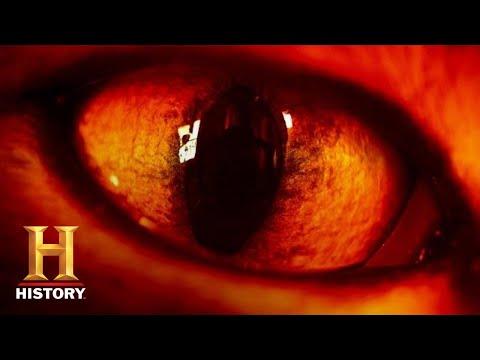 Ancient Aliens: ALIEN REPTILES MANIPULATE HUMAN DNA (Season 14) | History