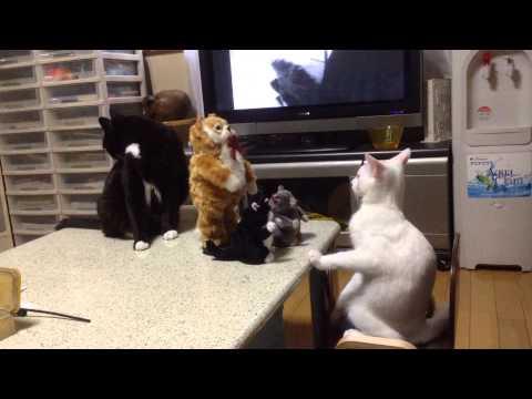 お座り猫 (видео)