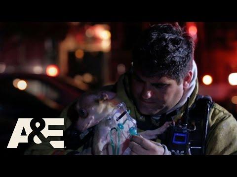 Nightwatch: Rush to the Puppy Rescue (Season 4, Episode 2) | A&E