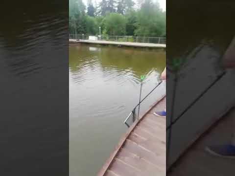 Видеоотчет о рыбалке за 19 июля 2021 г.