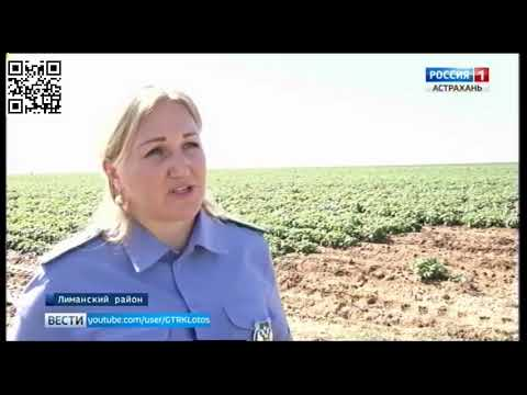 Специалистами Управления Россельхознадзора на полях Астраханской области проводится государственный фитосанитарный мониторинг