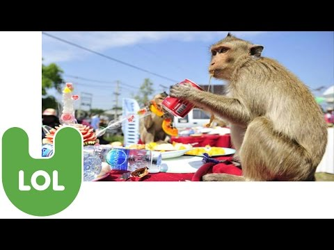 Monkey Buffet Festival in Thailand