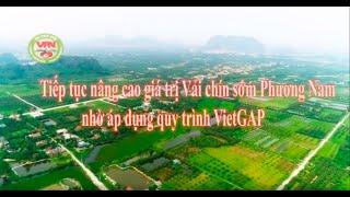 Tiếp tục nâng cao giá trị Vải chín sớm Phương Nam nhờ áp dụng quy trình VietGap