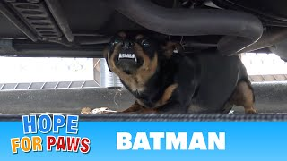 Homeless Batman lived under his Batmobile until Hope For Paws came to his rescue. by Hope For Paws