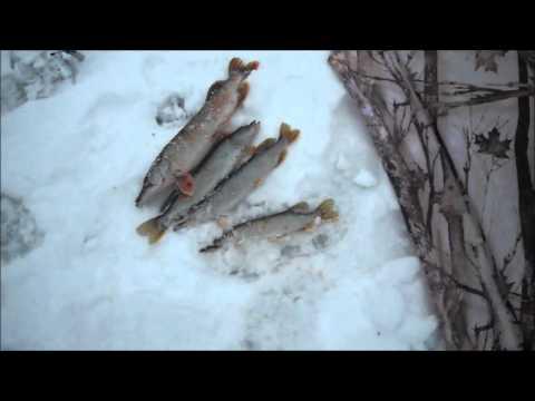 Отчёт о рыбалке 15.02.2013г