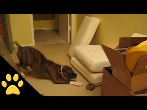WATCH: Dog goes CRAZY over a bag of marbles