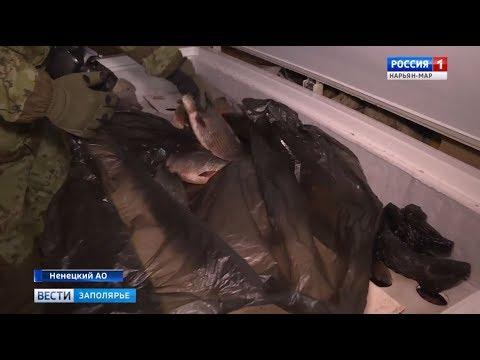 «Чёрные» рыболовы из Республики Коми продолжают браконьерить на территории НАО